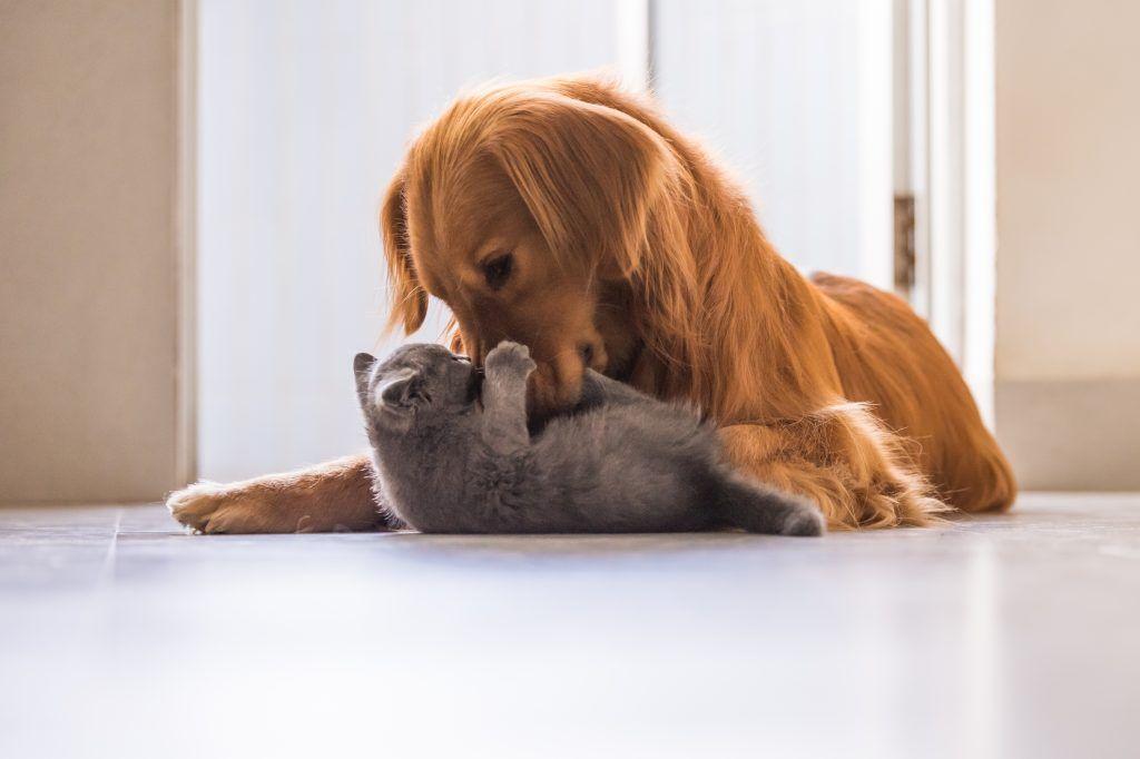 Binnenspeeltips voor je huisdier