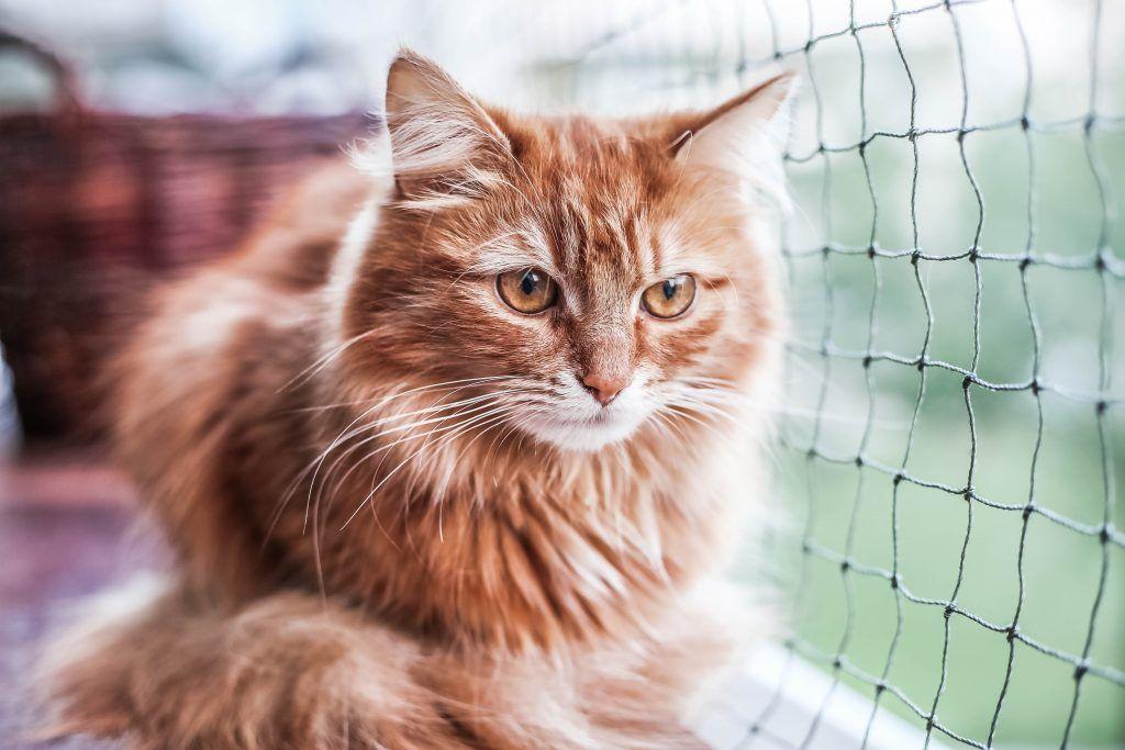 Maak van je balkon een kattenparadijs
