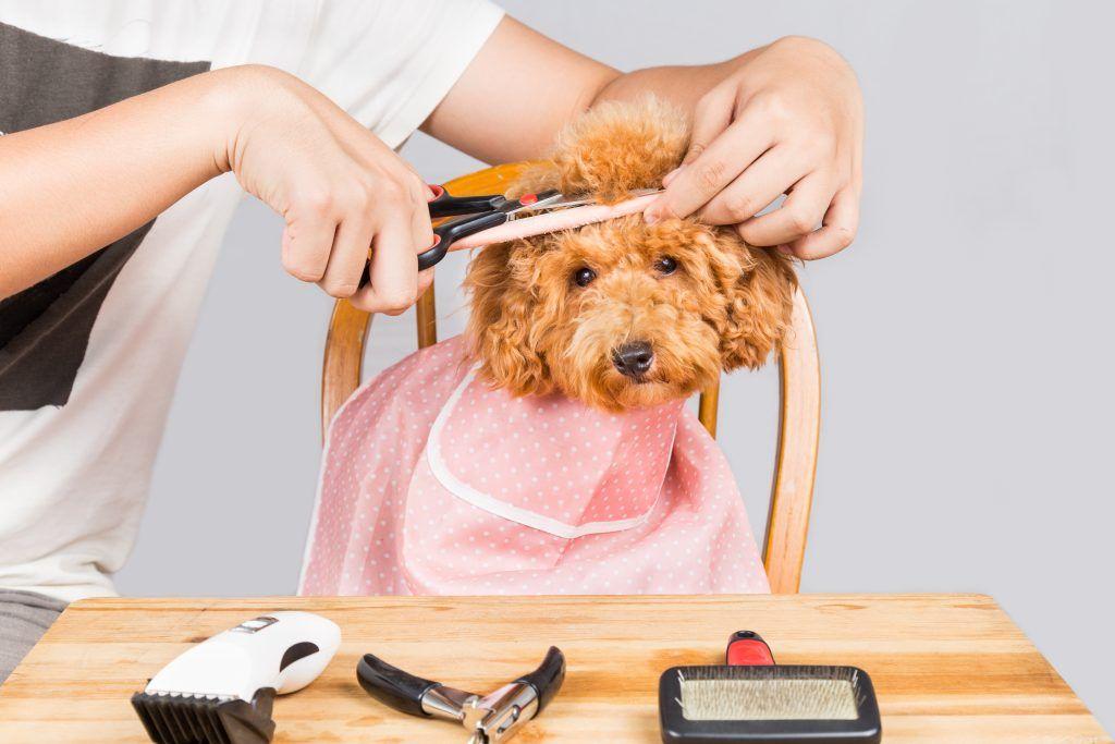 Mijn hond gaat vaker naar de kapper dan ik….
