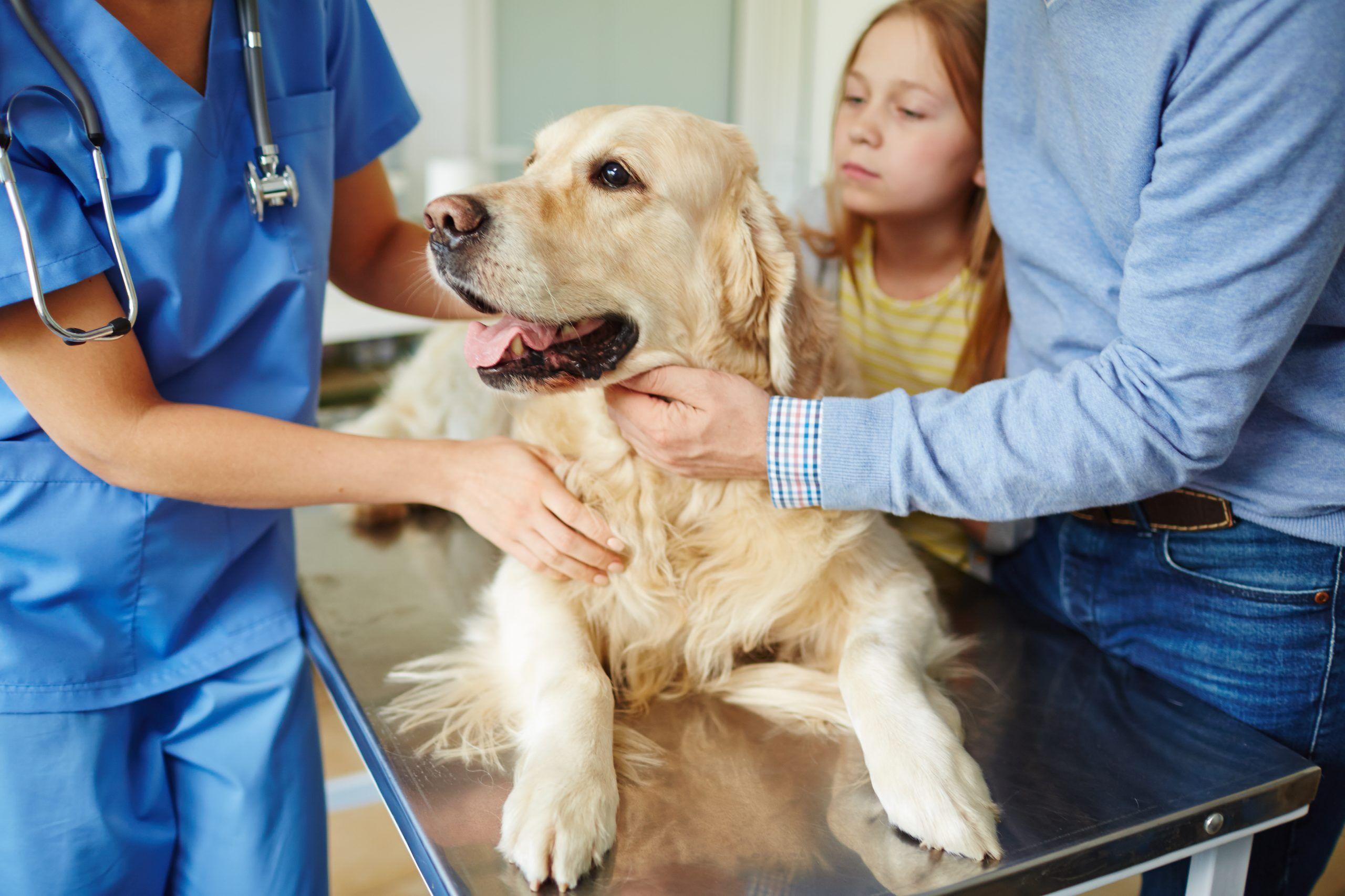 Huisdieren en het coronavirus