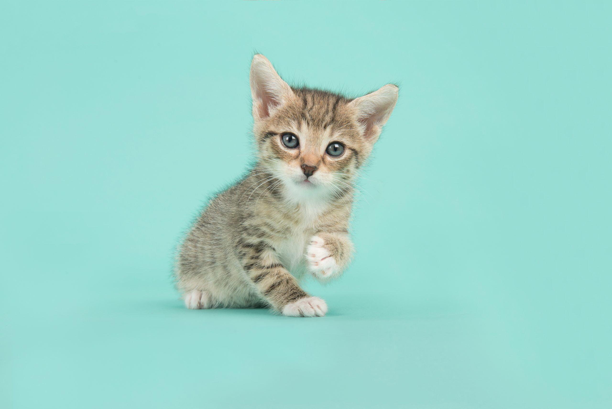 Puppy of kitten mee naar huis