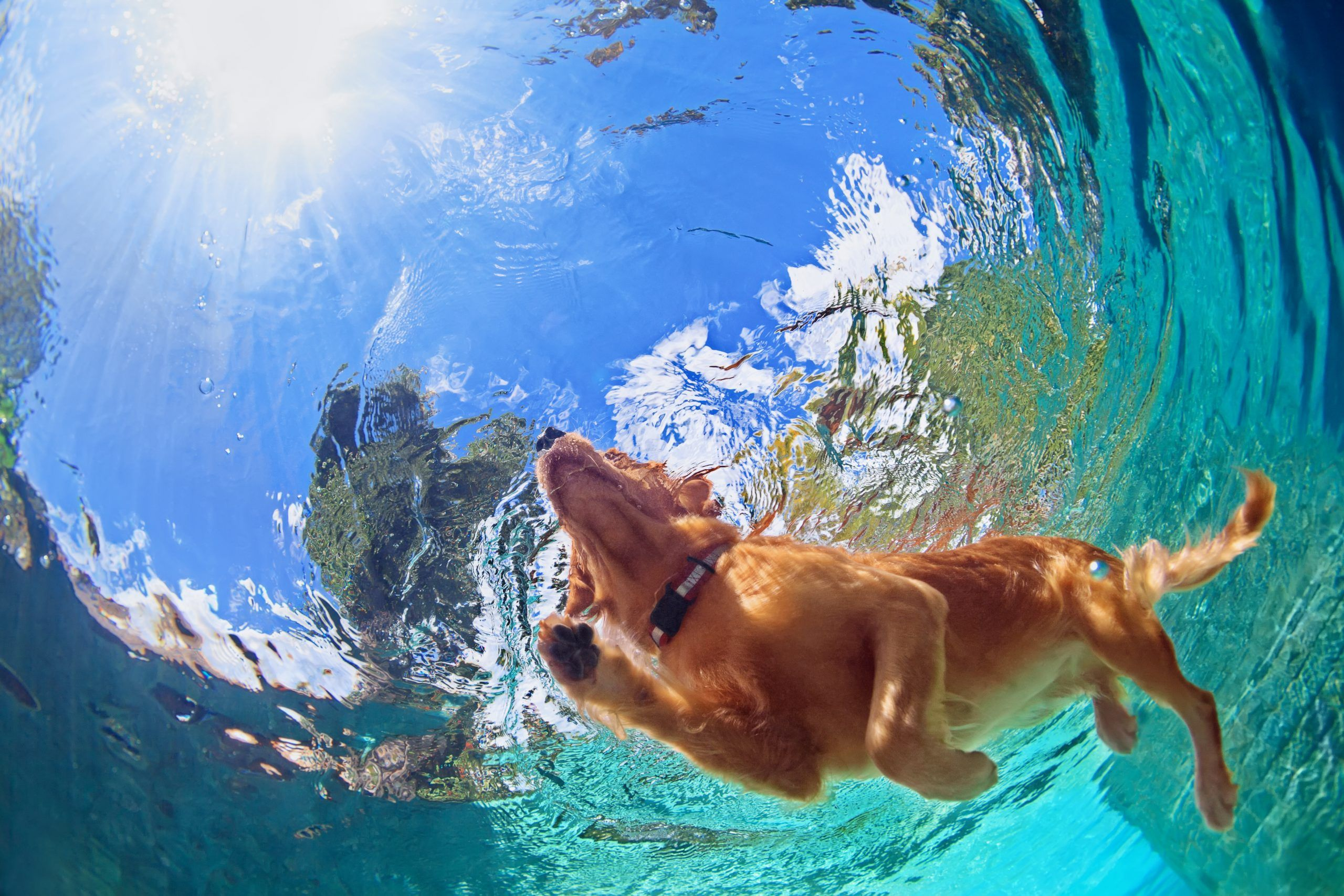 Hond laten zwemmen: tips voor de beste plekken en veiligheid